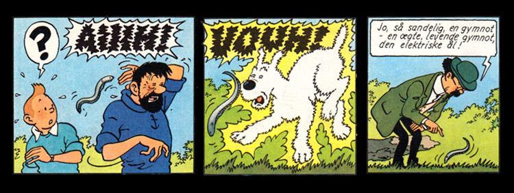 Tintin & Gymnoten